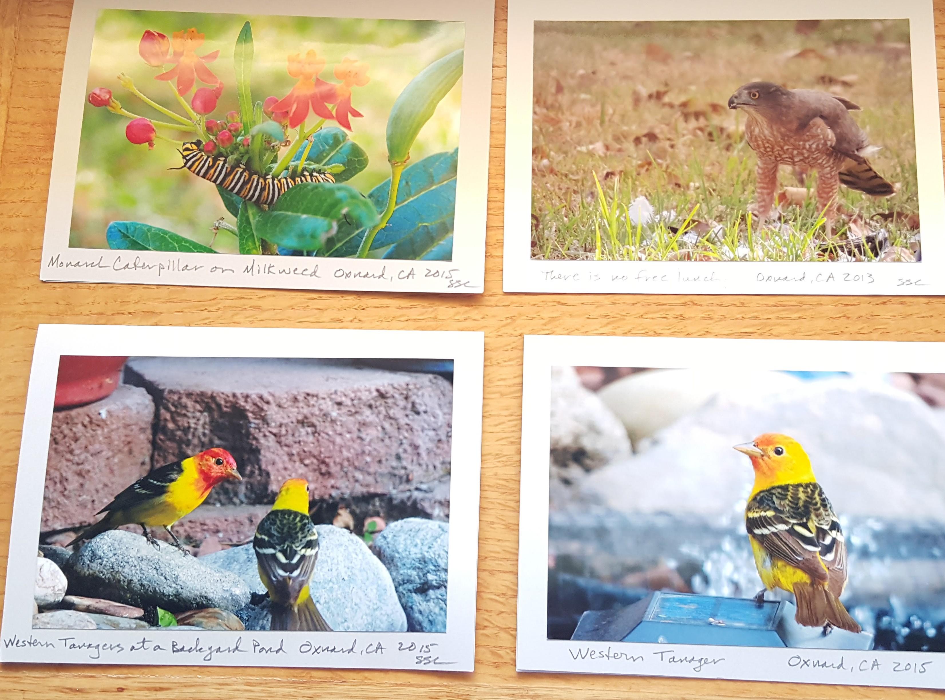 wild birds 3400 keel ave backyard