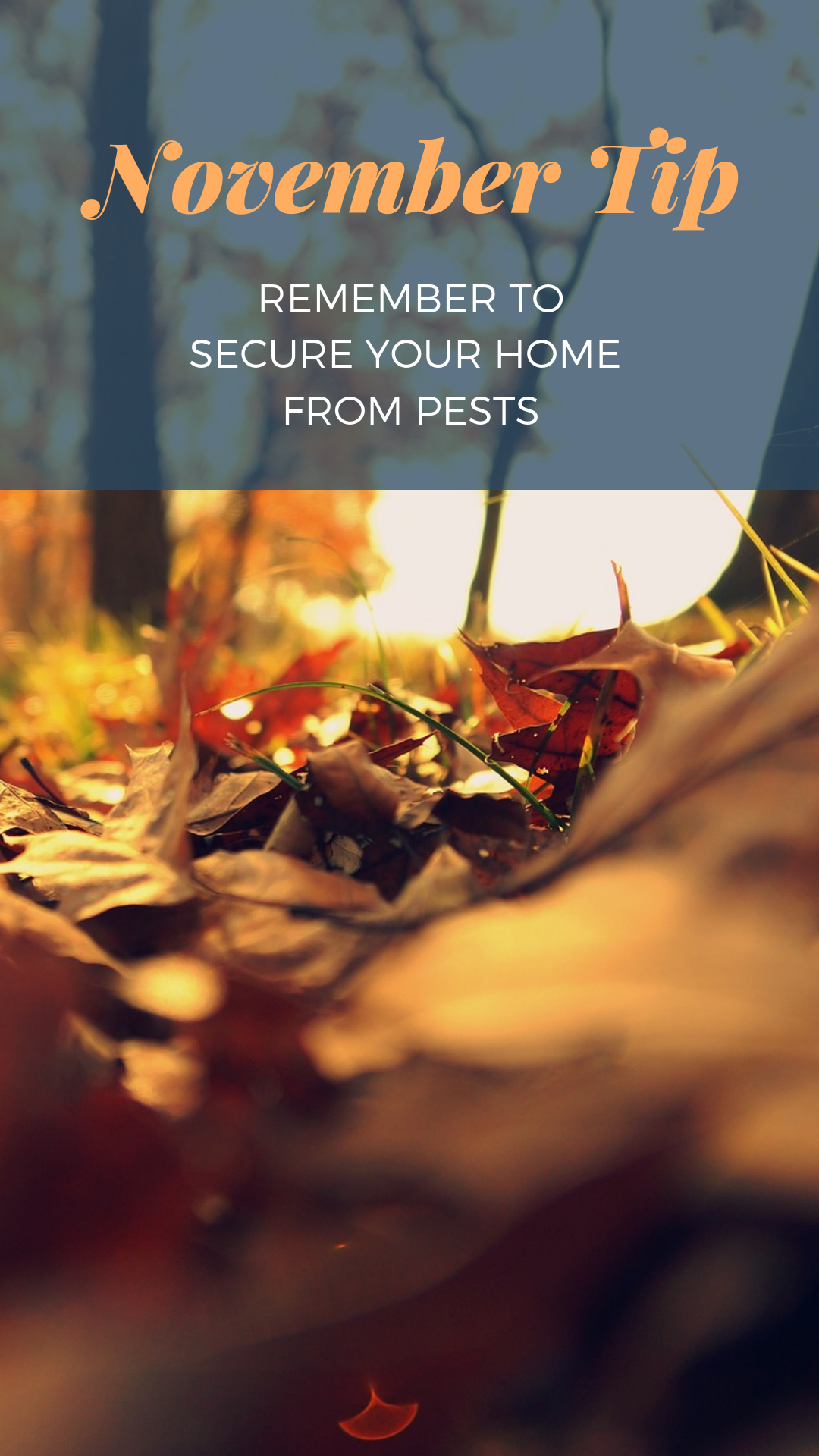 November home maintenance tips from Live in MT Real Estate Keep mice and snakes out of your home