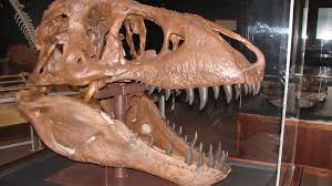 Dinosaur Trail in Montana; National Fossil Day; Live in MT Real Estate