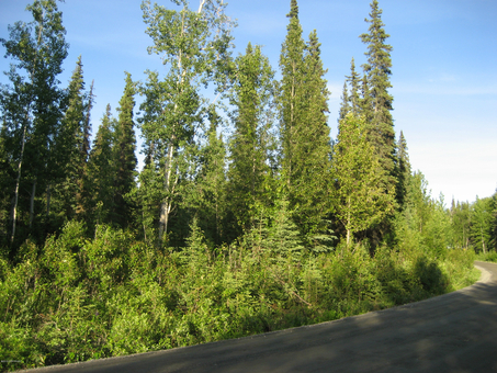 Lots and Land for Sale in the Kenai Penninsula, Lots & Land for Sale in the Kenai Penninsula