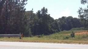 Lots and Land For Sale: 431 Hwy South
