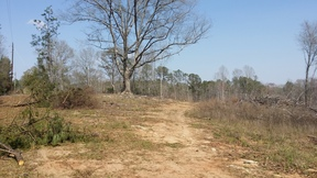 Lots and Land For Sale: County Road 282