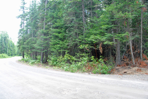 Lots and Land For Sale: Lot 14 Porcupine Trail