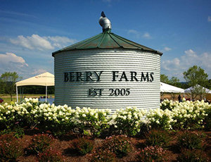 Homes for Sale in Berry Farms Franklin TN