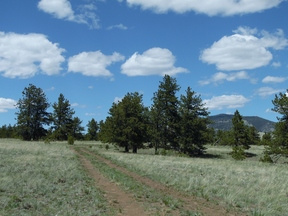 Lots & Land Sold: 141 Tess Trace