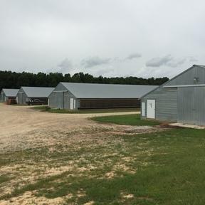 Poultry Farm Sold