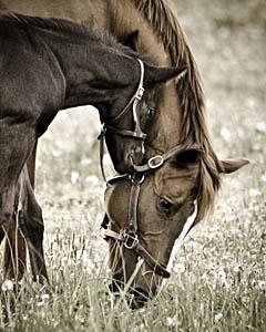 Mare & Foal ~ Bucks PA
