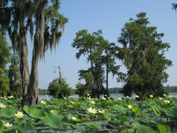 Moss Point Mississippi Real Estate
