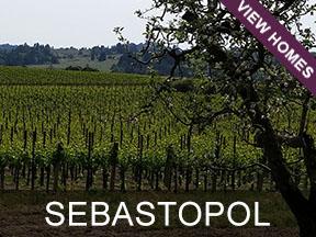 Sebastopol Real Estate