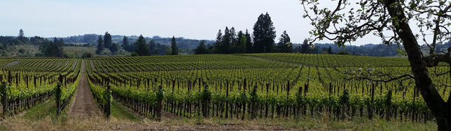 Sonoma Wine Country Real Estate Property Listings
