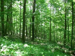 Davis WV Residential Lots & Land For Sale: $36,000