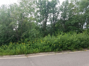 Rice Lake Residential Lots & Land For Sale: 802 E Gates Street