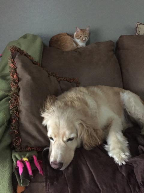 Pets no longer a detriment for real estate.