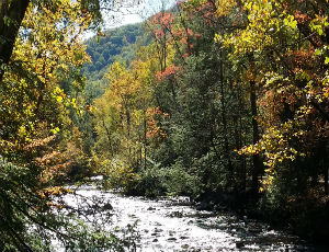 Homes for Sale in Wears Valley, TN
