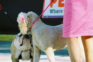 Posh Pooch Event in Celebration Florida