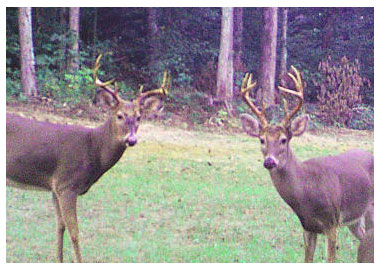 hunting land at auction, recreational property for sale, whitetail properteis