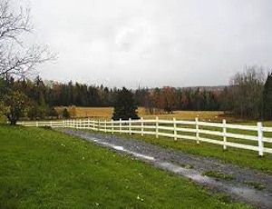 equine, cattle ranch, agriculture