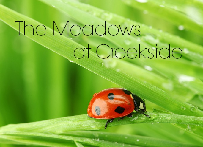 The Meadows at Creekside