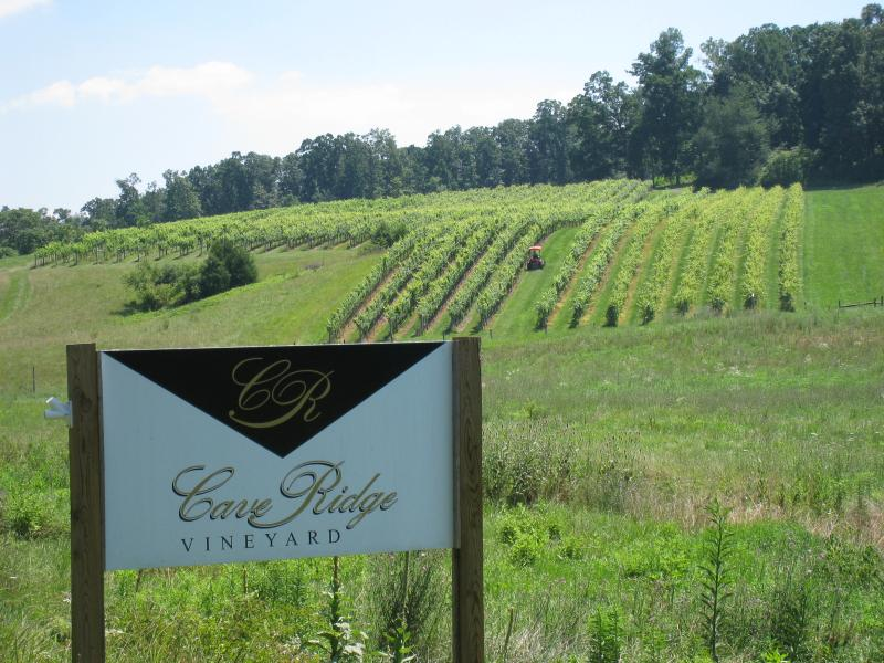 Cave Ridge Vineyard.jpg