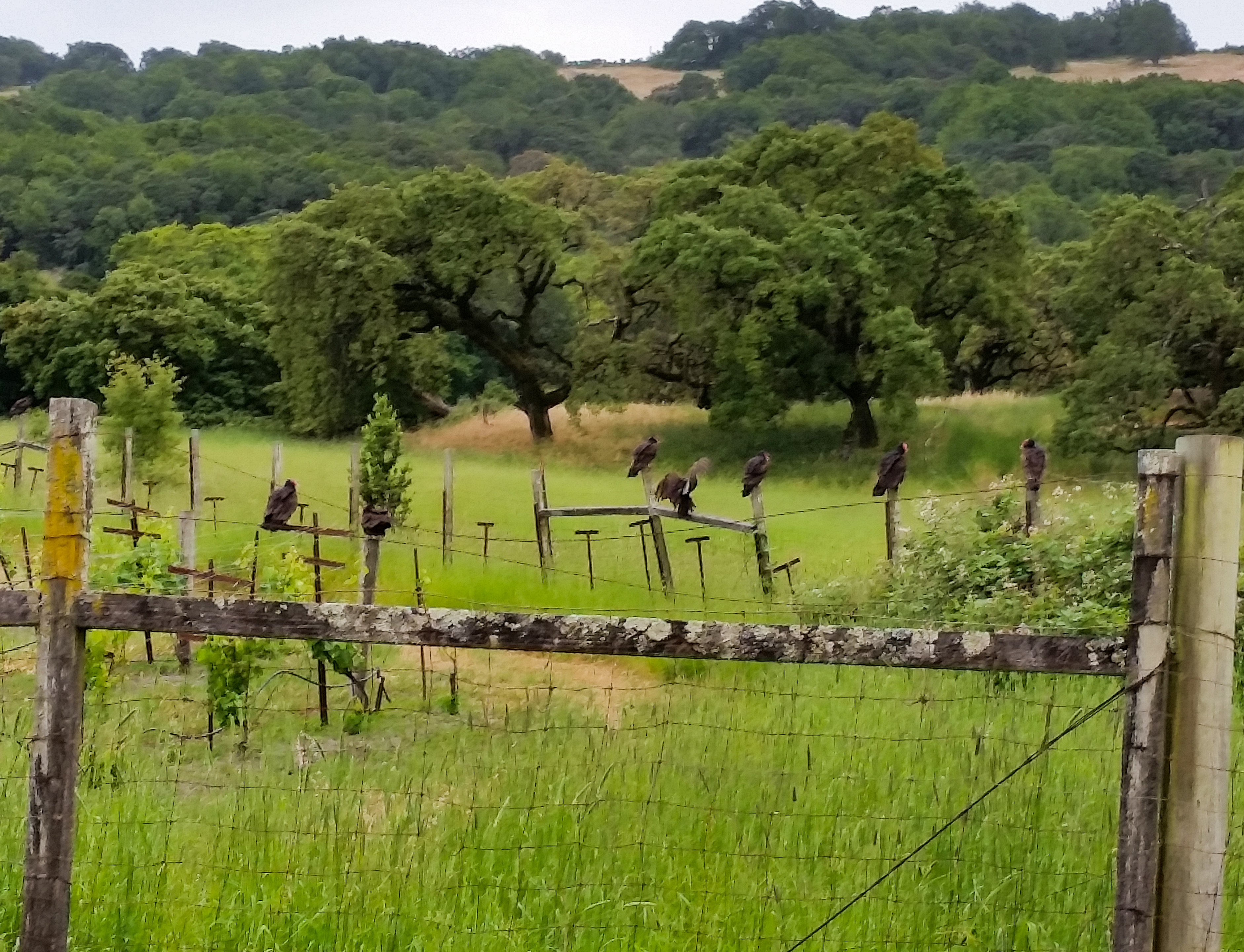 The George Ranch - Wildlife - Sonoma,CA