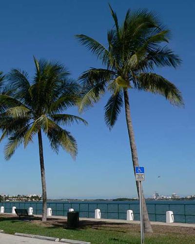 Homes for Sale in Miami Shores, FL