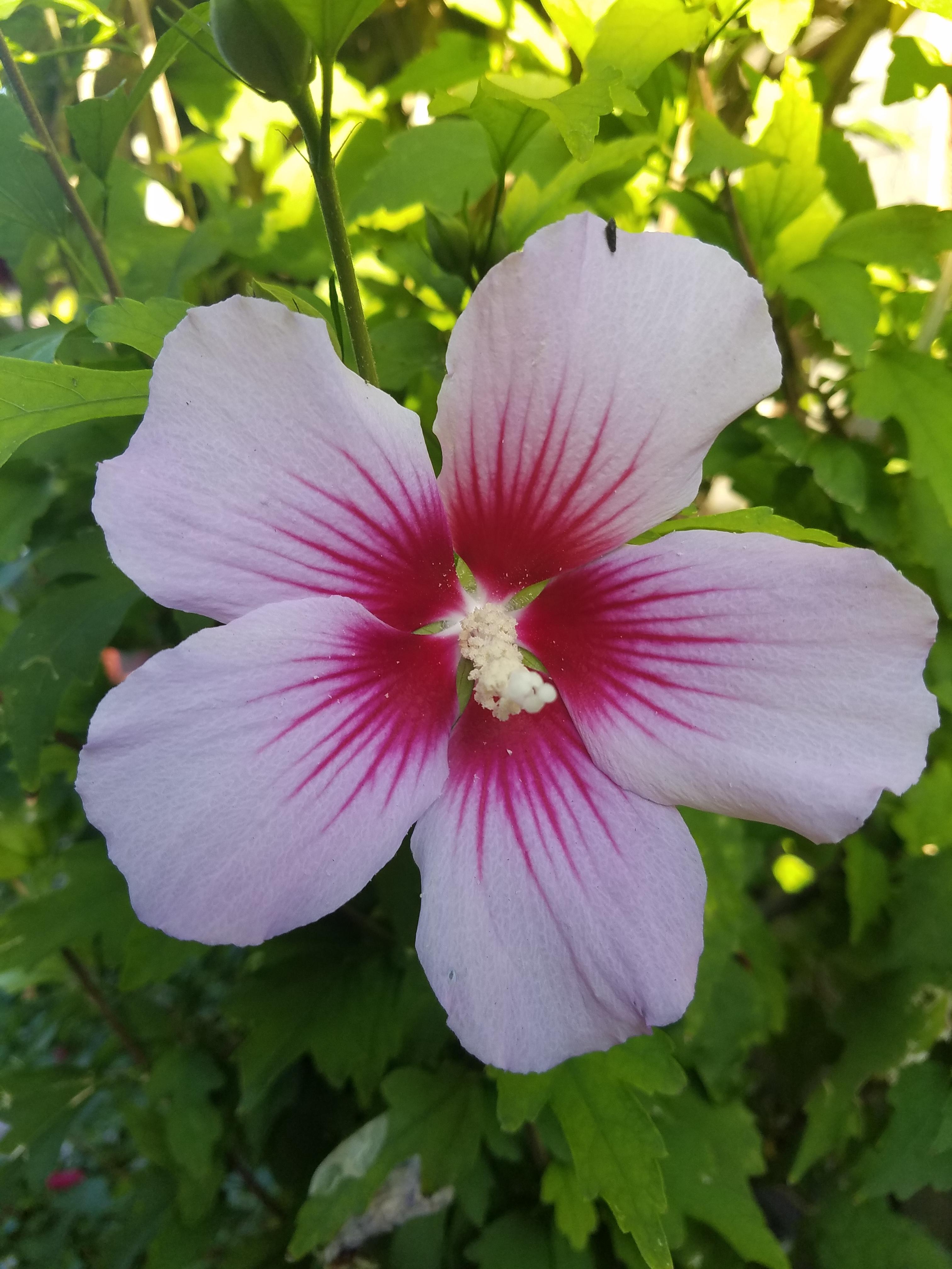 Hibiscus, EndoRealEstateGroup.com, 408.560.9021