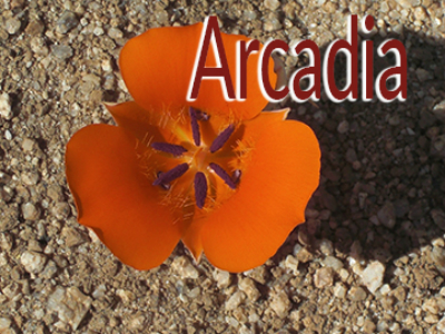Homes for Sale in Arcadia, Phoenix, AZ, call Friedman Realty Associates at 623-476-2491