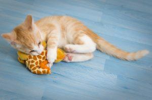 Friedman Realty Associates, kitten with toy