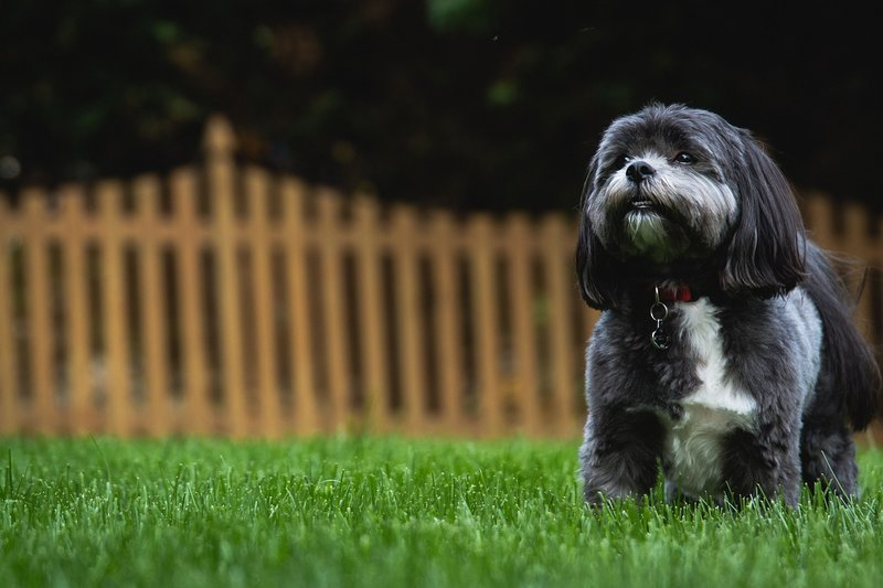 Friedman Realty Associates, cute dog in backyard