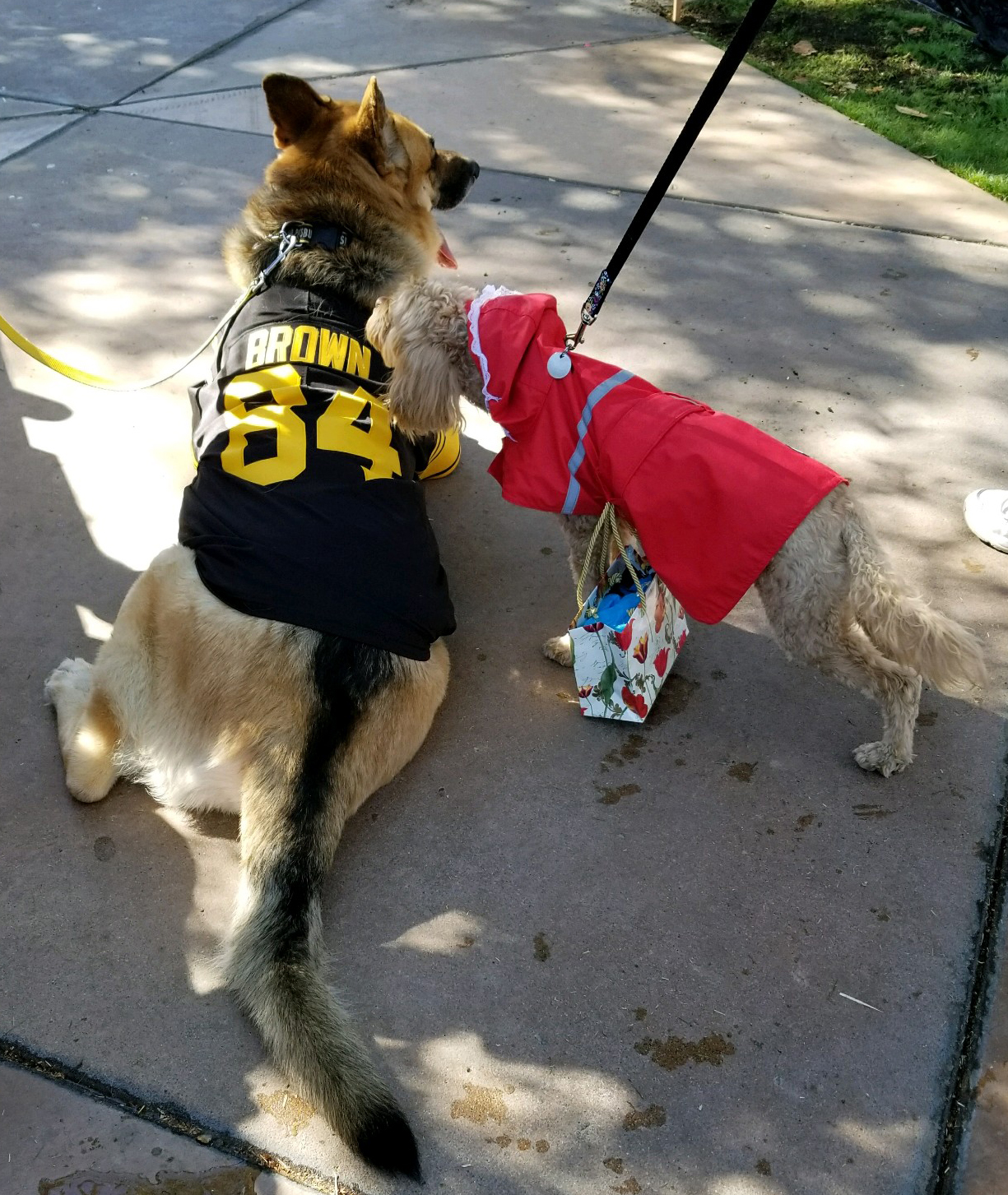 Friedman Realty Associates, Pittsburgh Steelers fan and Little Red Riding Hood