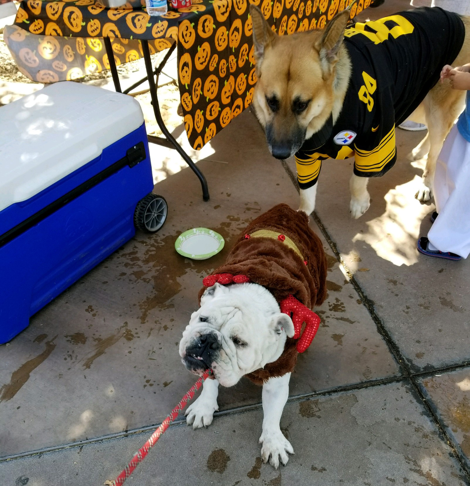 Friedman Realty Associates, reindeer and Pittsburgh Steelers contestants, Spooky Paws and Claws 2017