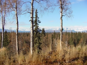 Lots And Land Sold: 12 E. Talkeetna Spur Rd.