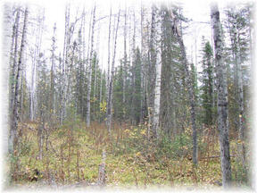 Lots And Land Sold: 12345 Section Line Rd.
