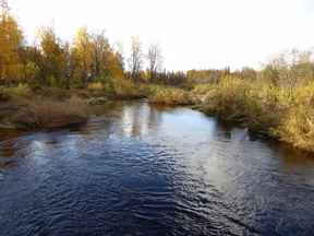 Lots And Land Active: 9738 E Susitna River Rd.
