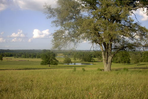 East Texas Rural, TX  | MLS# Looking for Land | Tony Roling