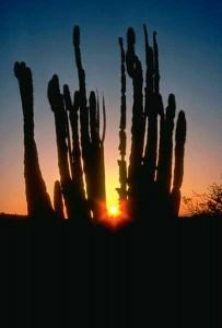 Sun City Grand homes for sale Desert Cactus sunset