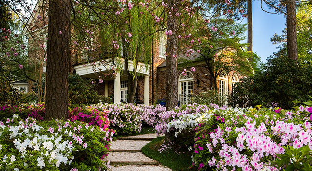 Spring Valley Home and Its Beautiful Spring Azaleas