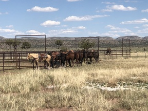 Chaves County Farm & Ranch For Sale: Triangle Sky Ranch