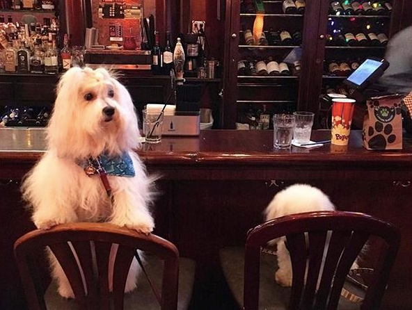 Dog-Friendly Bars in Chicago