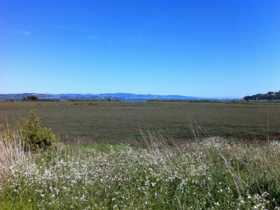 Homes for Sale in Corte Madera, CA