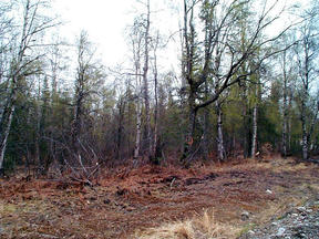 Lots And Land Sold: 33363 S. Oilwell Rd