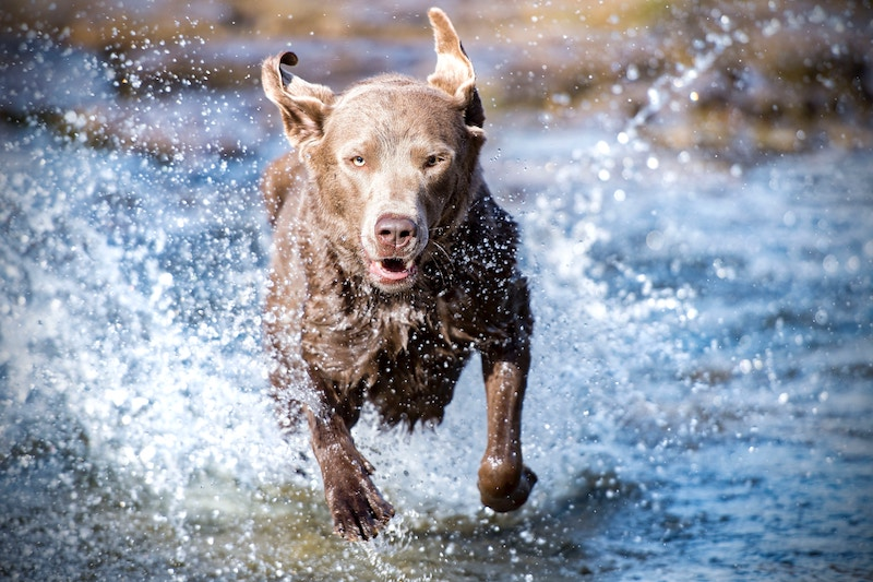 #LiveLikeALocal: 7 Parks and Trails to Take Your Dog to in the Hudson Valley