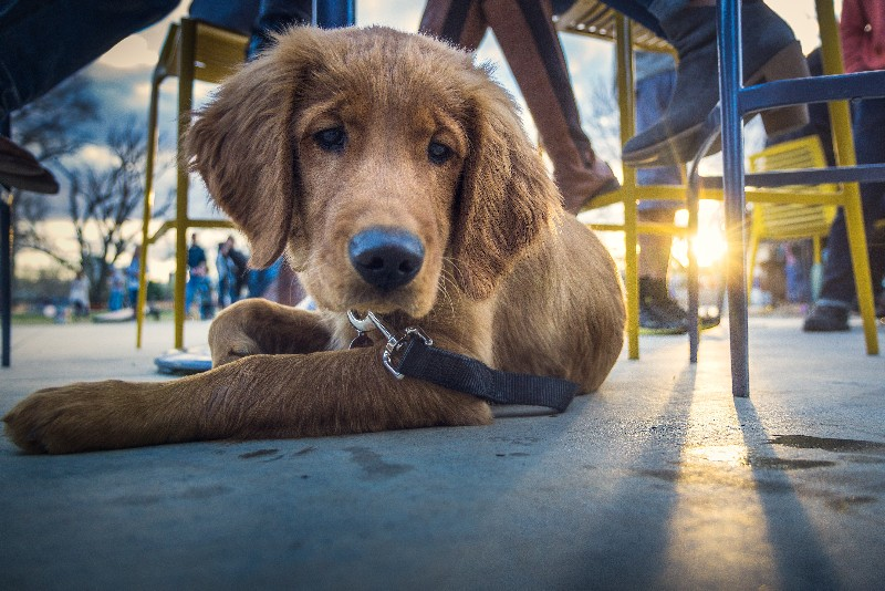 #LiveLikeALocal: 10 Restaurants to Take Your Dog to in the Hudson Valley