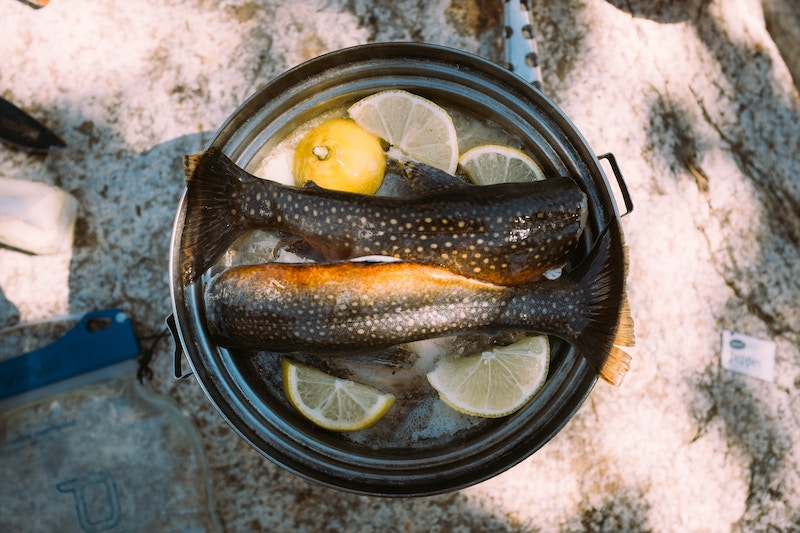 Live Like A Local: Fly Fishing in the Catskills