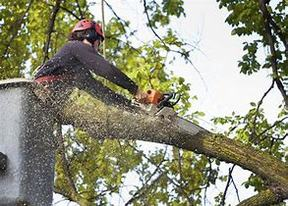 Business For Sale: Very Profitable Tree Service