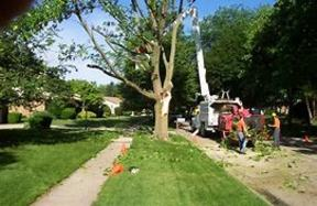 Business For Sale: High Volume Tree Service