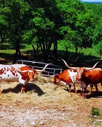 Ranches for Sale in TX