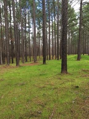 Lots And Land Active: Tract B Botan Road