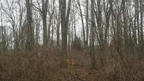 Deerfield Twp. OH Residential Active: $29,900