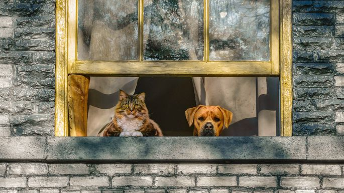What Are the Best Cities for Dog Lovers and for Cat Lovers in 2017?